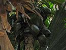 Фото Сейшелы Остров Praslin