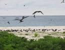 Фото Сейшелы Bird Island